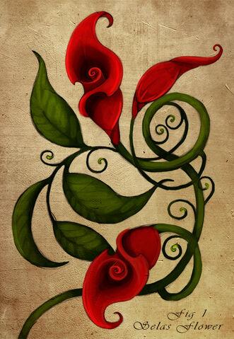 File:Selas Flower.jpg