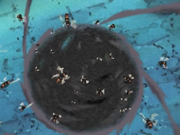 Insect Jar Technique