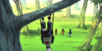 Tree Climbing Practice