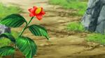 Mato plant