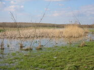 Mellon Wetlands