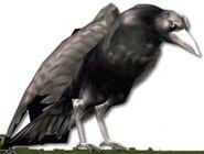 Enemy Crow 128