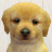 Nintendogs icon