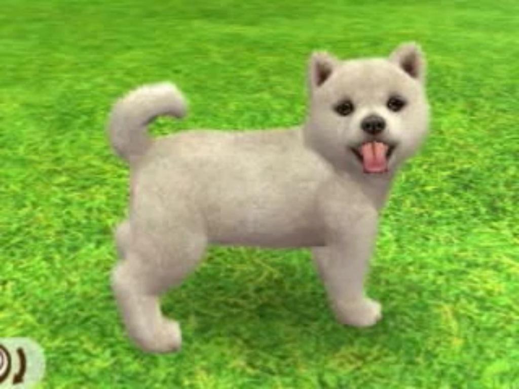 Shiba Inu Nintendogs Wiki Fandom Powered By Wikia