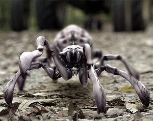 Arachnoquake1