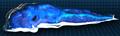 Oscillating Rainbow Slug Troop