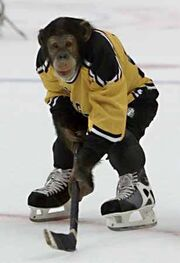 Ice hockey monkey.jpg