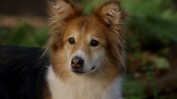 Once Upon A Time Show Dog Season  Heartless