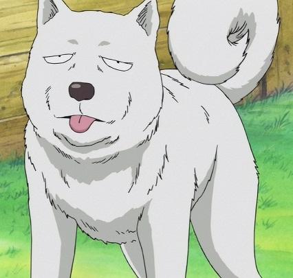 File:Pochi Anime Infobox.png