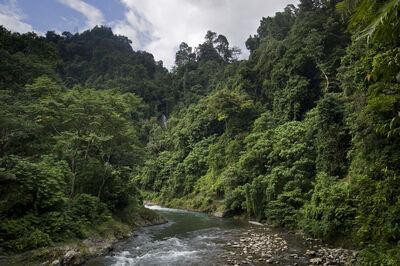 Tropical-rainforests-of-sumatra-2