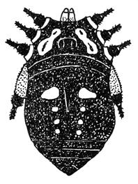 Gagrellula albitarsis