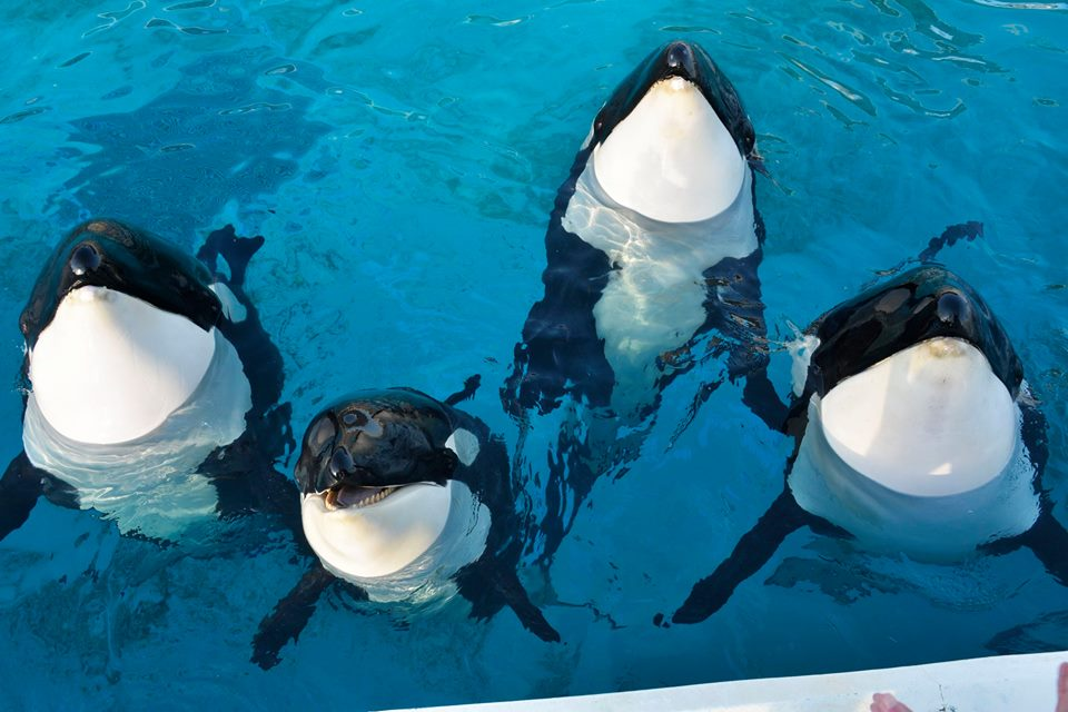 Des nouvelles des orques du sea world kamogawa - Page 2 Latest?cb=20160117054028