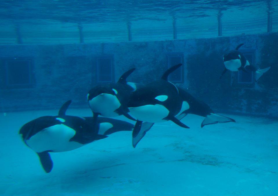 Des nouvelles des orques du sea world kamogawa - Page 2 Latest?cb=20160117052718