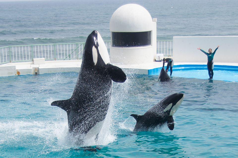 Des nouvelles des orques du sea world kamogawa - Page 2 Latest?cb=20160117052505