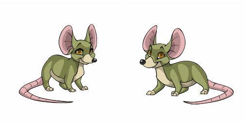 File:Rattus.jpg