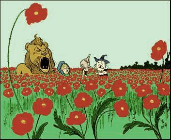 Poppies~2.jpg