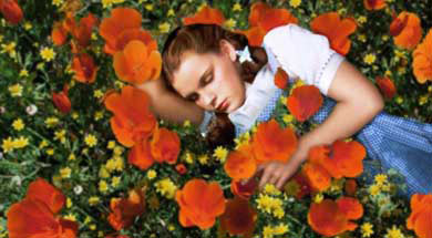 File:WizardofOz poppies.jpg
