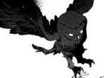 Owl - isolated