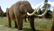 American Mastodon