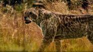 BBC.Walking.with.Beasts.Pt.4.Next.of.Kin.DivX5-AC3.www.mvgroup.org.uk.avi snapshot 02.44 -2016.10.08 15.37.11-