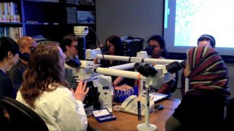 The Baylor College of Medicine Pathology Residency Experience