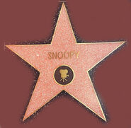 Snoopy's star from the hollywood walk of fame 2015