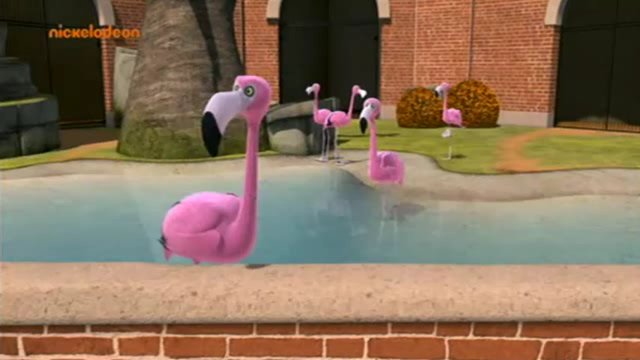 File:Flamingo 1.jpg
