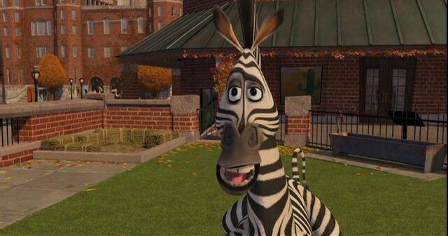 File:Zebra 10.jpg