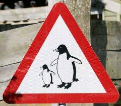 File:Penguin-crossing-sign1.jpg