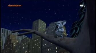 Koala 1