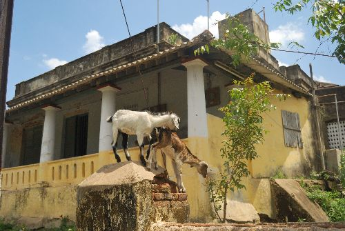 File:Goats house.jpg