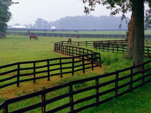HorseFarmGoshenKentucky 1280x960