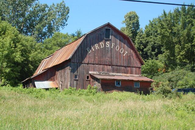File:Birdsfoot Barn, location of Garlic Festival.jpg