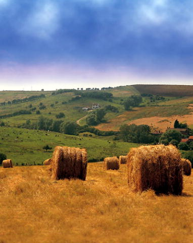 File:Hay fields.jpg