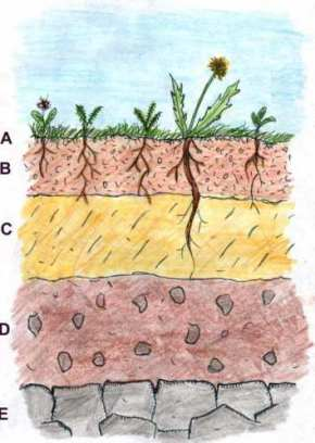 Soilprofile1