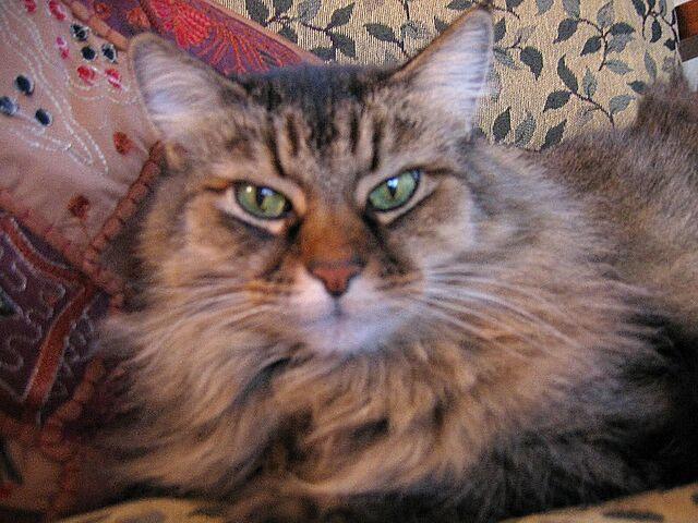File:Lucy wiki1.jpg