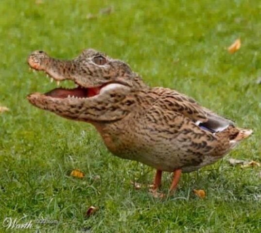 File:Crocoduck.jpg