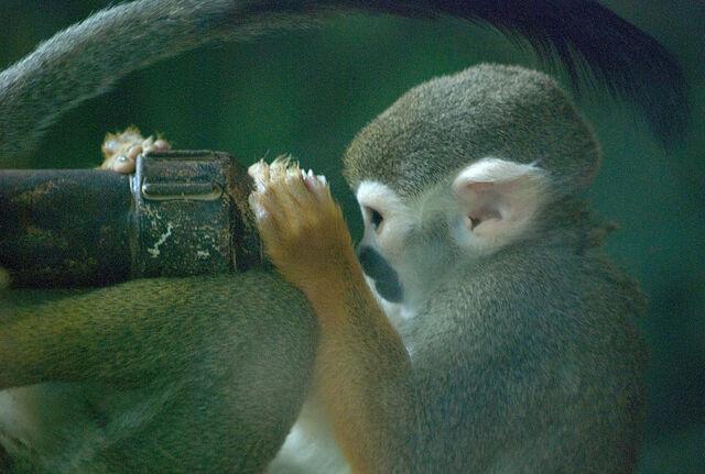 File:Monkey scientist.jpg