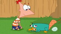 Phineas talks to Perry.jpg