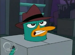 209a- angry perry