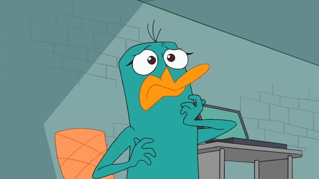 File:Platypus Candace shocked.jpg