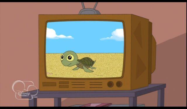 File:Baby turtle.jpg