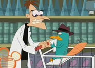 Perry and doof at store