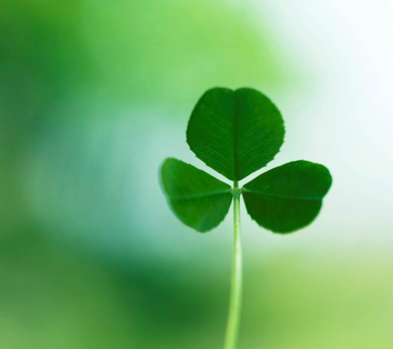 Way Past Normal: SHAMROCKS, CLOVERS AND LUCK (Feelin Lucky ...