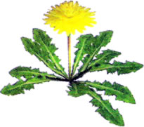 File:Dandelion art.jpg