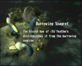 File:Reel4 Burrowing Snagret.png