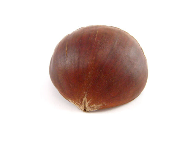 File:Chestnut-01.jpg