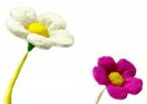 File:PikFlowers.PNG