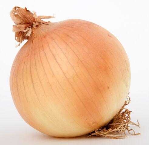 File:Onion2.jpg