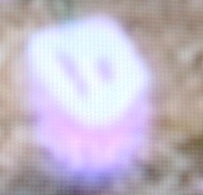 File:Spirit 1.jpg
